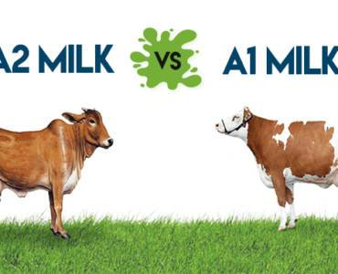 A2 Gir Cow Milk Keeping You A1-Dering